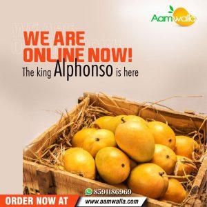 alphonso mango ratnagiri, alphonso mango price, buy devgad mangoes,