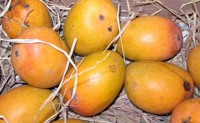 Everything you need to know about Indian Alphonso Mango