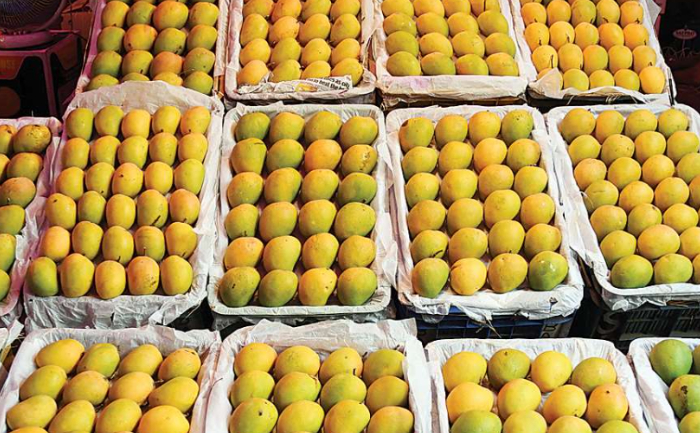Reasons why Alphonso mangoes are expensive