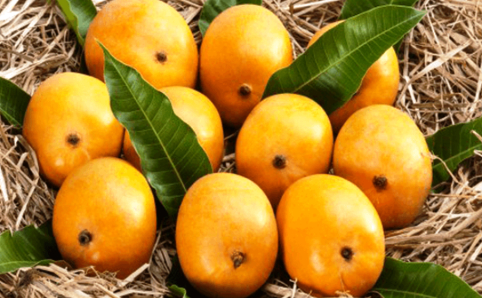 Interesting facts about Indian Alphonso mangoes