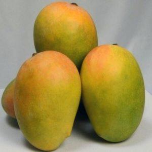 kesar mango online,