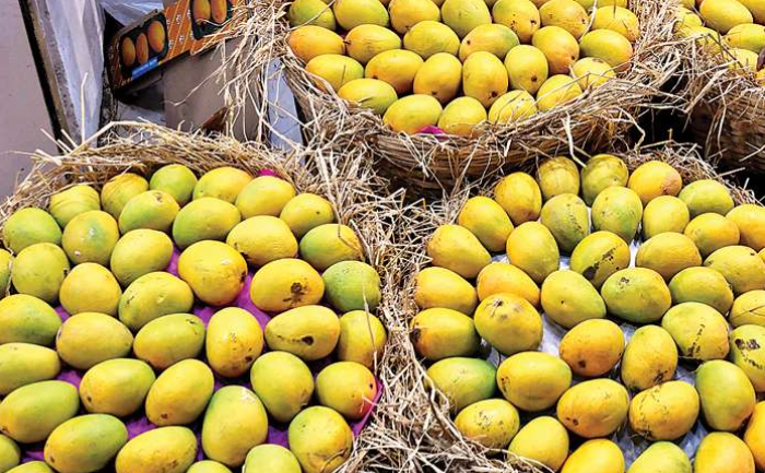 Kesar To Alphonso- Types Of Mangoes Found In India