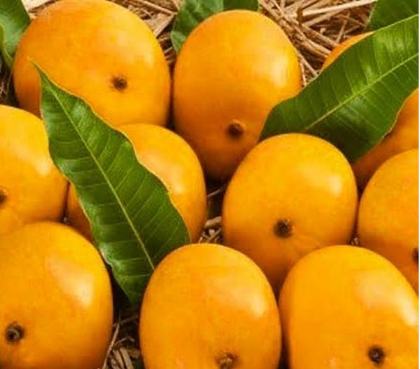 alphonso mango, alphonso mangoes online,
