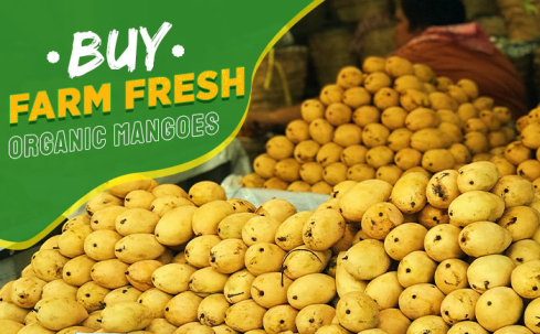 buy organic mangoes, how to buy fresh mangoes,
