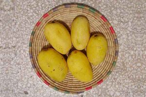 mango chausa, best variety of mango,