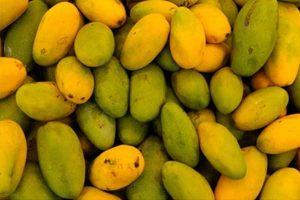 dasheri mango taste, dasheri mango online,