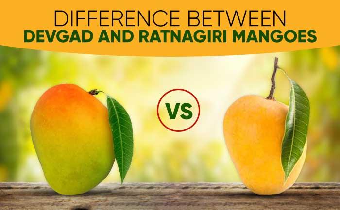 devgad mangoes, ratnagiri mangoes, hapus alphonso, alphonso mangoes,