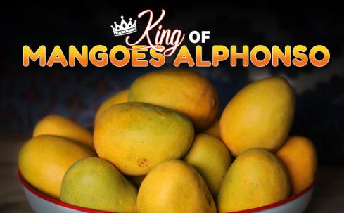 alphonso mangoes, king of mangoes alphonso,