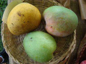 langra mango, langra mango online, langra mango price in india,