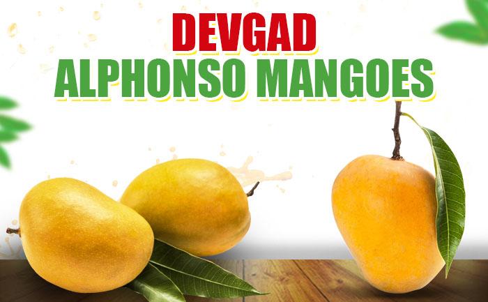devgad mangoes, hapus mangoes, mangoes online in india,
