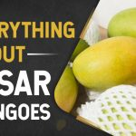 Kesar Mangoes: Everything about this variety and its origin