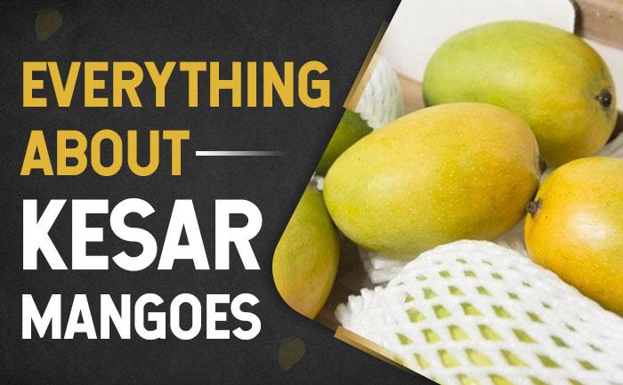 kesar mangoes, buy mangoes in india,