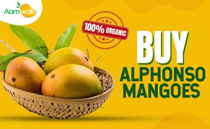 order alphonso mango online, devgad mangoes online,