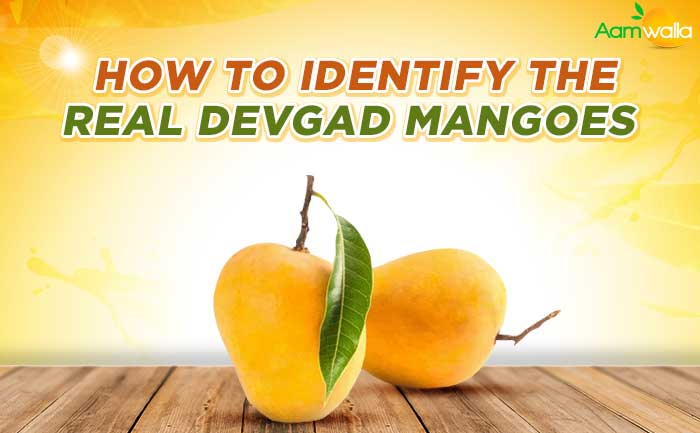 devgad mangoes, Mangoes order online