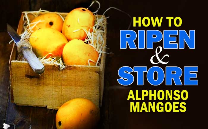 alphonso mangoes, how to store mangoes for long time,