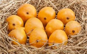 alphonso mangoes storage, how to store mangoes,