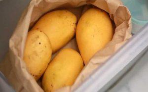 ways to store organic devgad mangoes, farm-fresh mangoes,