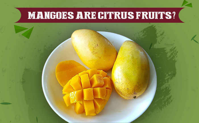 mango citrus fruits, aamwalla, buy mangoes online,