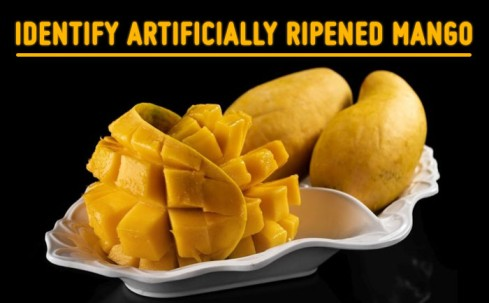 identify artificially ripened mangoes, organic mangoes online, farm fresh mangoes,