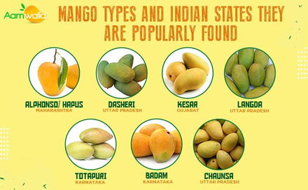 Mango types and Indian states they are popularly found – Alphonso (Hapus) to Dasheri