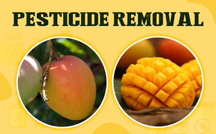 5 Simple DIY Techniques to Remove Pesticides from Mangoes